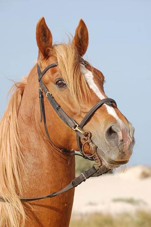 Font ecran chevaux page 8 - Image tete de cheval ...